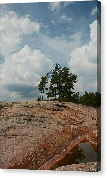 Wind Swept Trees On Rocks Canvas Print