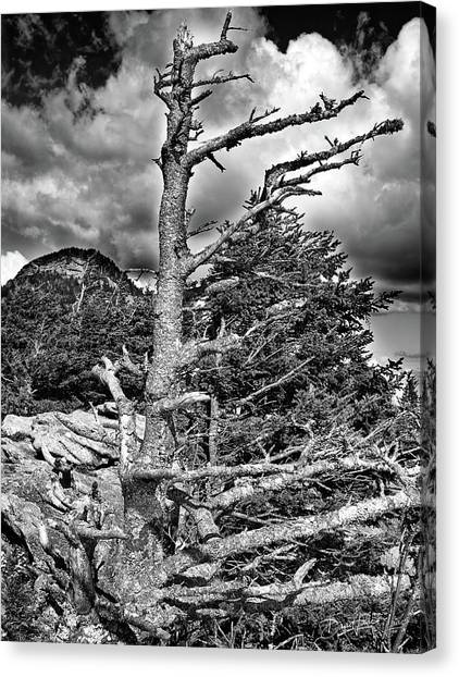 Canvas Print featuring the photograph Wind Worn But Strong by David A Lane