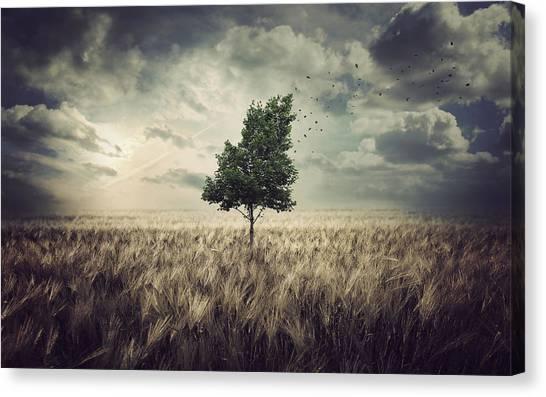Corn Field Canvas Print - Wind by Zoltan Toth