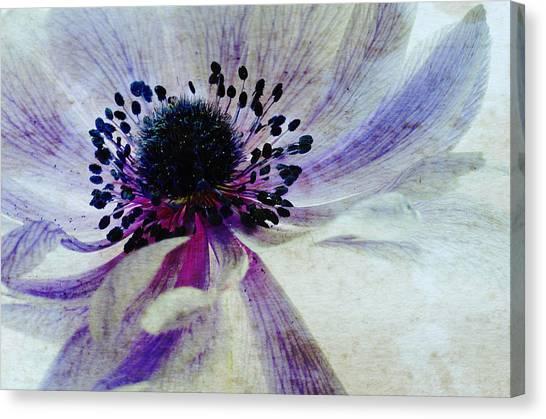 Susann Serfezi Canvas Print - Windflower by AugenWerk Susann Serfezi
