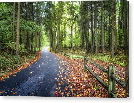 Woodland Walk Canvas Print - Winding Walkway by Tom Mc Nemar