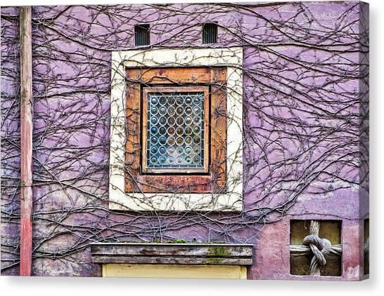 Window And Vines - Prague Canvas Print
