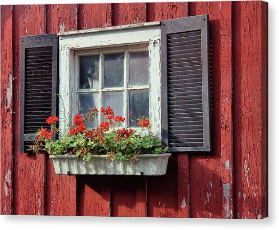 Window Box Canvas Print by Dressage Design