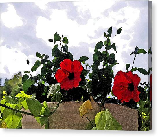 Window Flowers Canvas Print by James Granberry