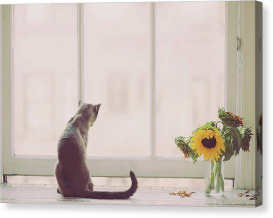 Cat Canvas Print - Window In Summer by Cindy Loughridge