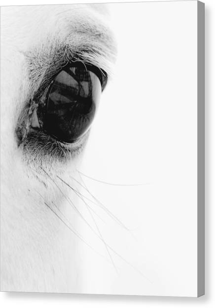 Black and white horse canvas print window to the soul by ron mcginnis