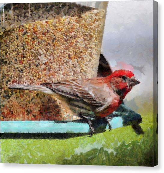 Windsor House Finch Canvas Print