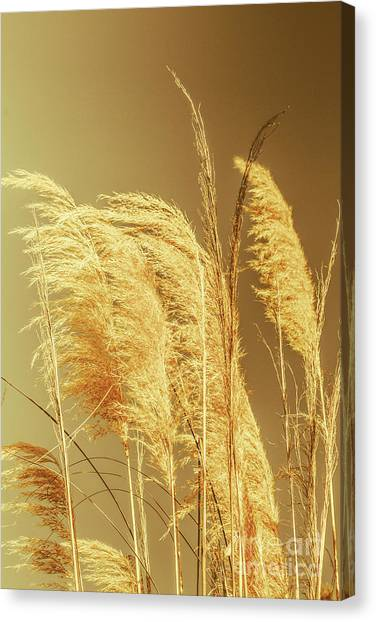 Windswept Autumn Brush Grass Canvas Print