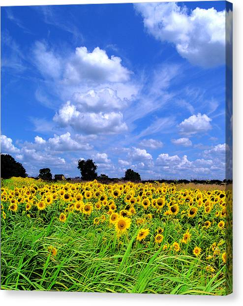 Windswept Field And Sky Canvas Print