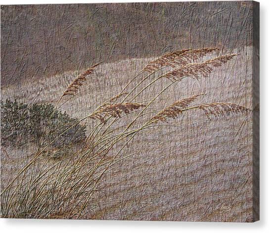 Windswept Canvas Print by Gordon Beck