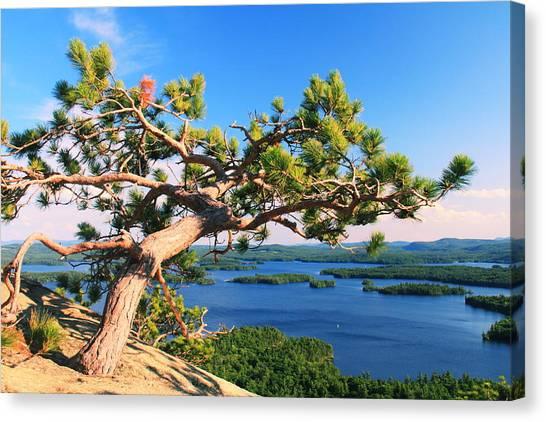 Windswept Pine On Rattlesnake Mountain Canvas Print