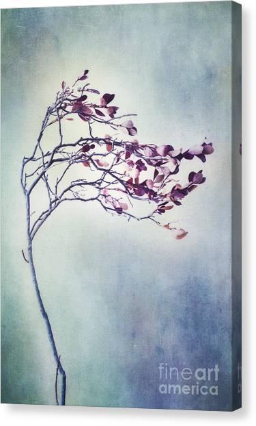 Blueberries Canvas Print - Windswept by Priska Wettstein