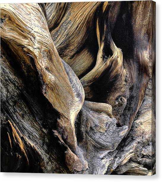 Windswept Roots Canvas Print