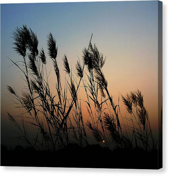 Windy Sunset Canvas Print
