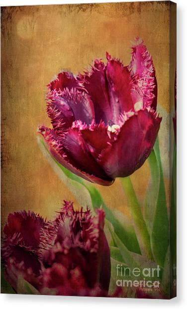 Wine Dark Tulips From My Garden Canvas Print