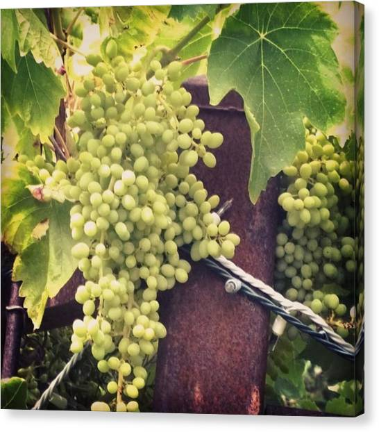 Fruits Canvas Print - #wine On The #vine . Love These Little by Shari Warren