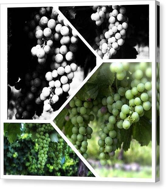 French Canvas Print - Wine Photography by Georgia Fowler