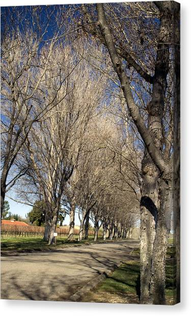 Winery Road Canvas Print