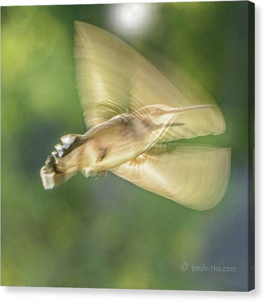 Wing Shadow Canvas Print