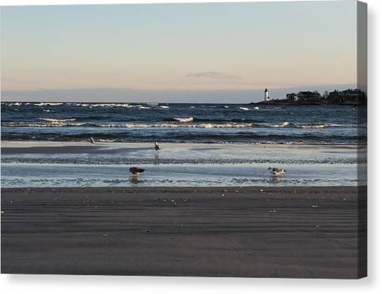Wingaersheek Beach Seagulls At Sunrise Canvas Print