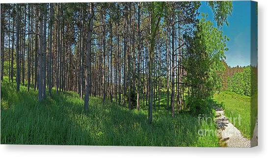 Wingate Prairie Veteran Acres Park Pines Crystal Lake Il Canvas Print