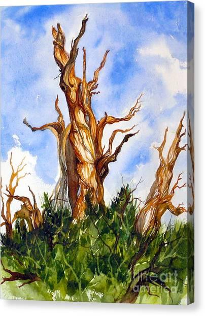 Winged Bristlecone Canvas Print