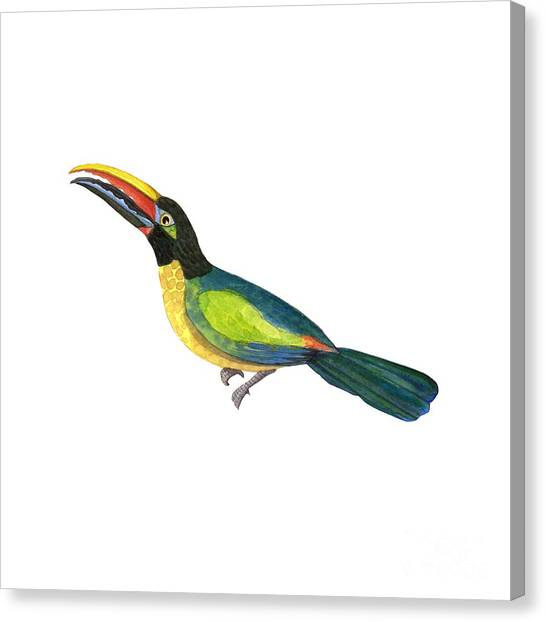 Toucans Canvas Print - Winged Jewels 2, Watercolor Toucan Rainforest Birds by Audrey Jeanne Roberts