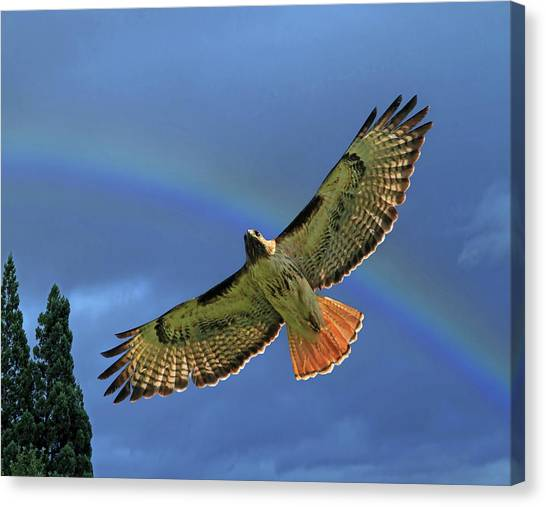 Wings 2 Canvas Print