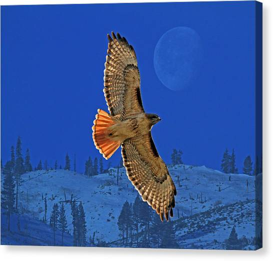 Hawks Canvas Print - Wings by Donna Kennedy