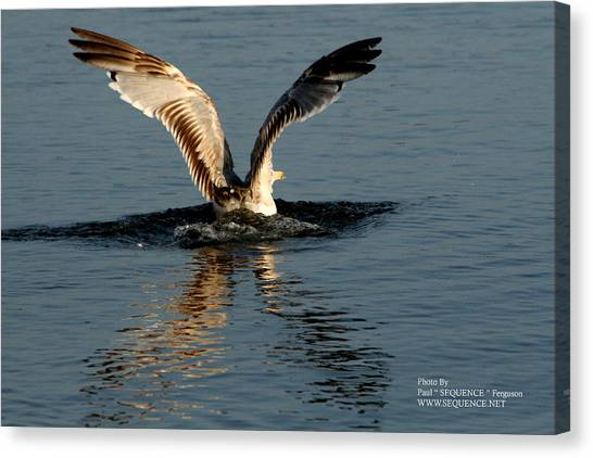 Wings On The Sea Canvas Print