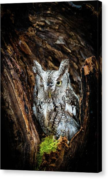 Wink, Wink Canvas Print by Tracy Munson