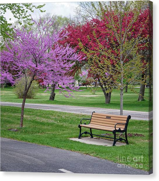 Winona Mn Bench With Flowering Tree By Yearous Canvas Print
