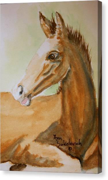 Winston Canvas Print by Ann Sokolovich