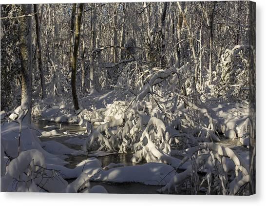 Winter At Borden Brook Canvas Print