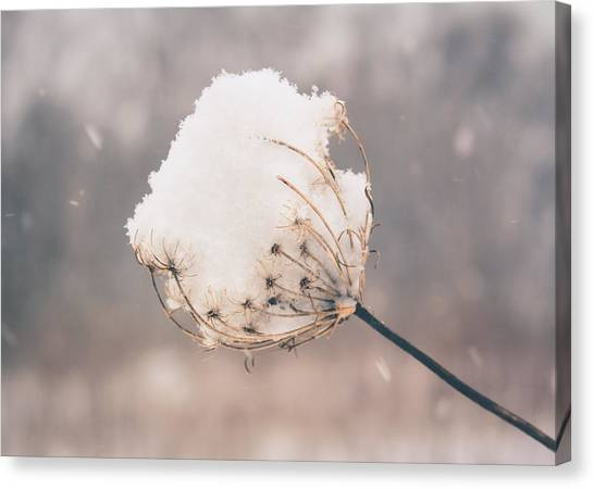 Canvas Print featuring the photograph Winter Beauty by Viviana  Nadowski