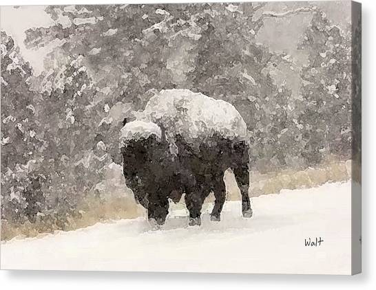 Winter Bison Canvas Print