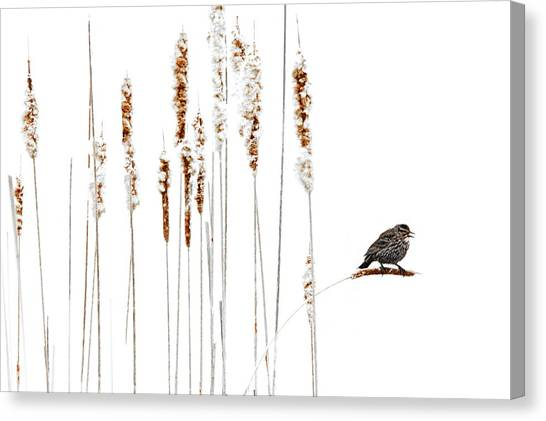 Winter Came Suddenly Canvas Print