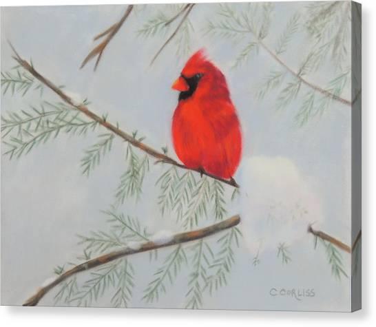 Winter Cardinal Canvas Print