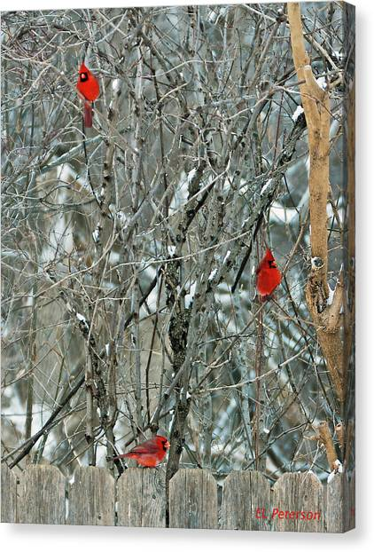 Winter Cardinals Canvas Print
