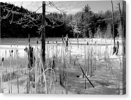 Winter Cattails Canvas Print