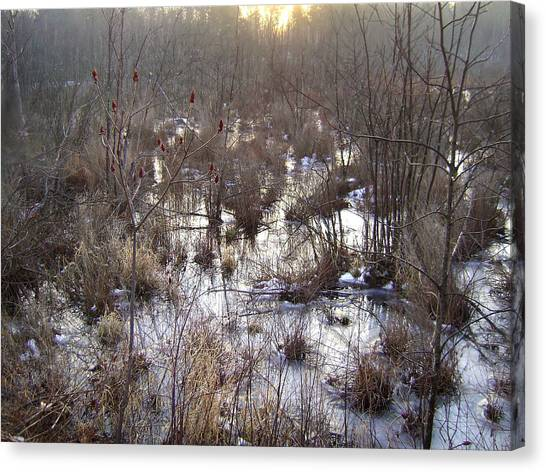 Winter Color Of A Wetland Canvas Print
