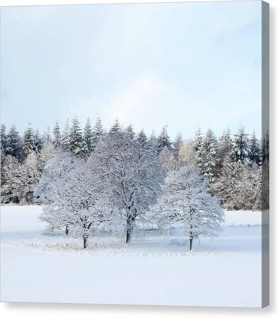 Canvas Print - Winter Copse by Richard Nixon