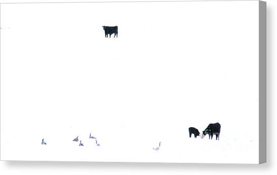 Winter, Feed Zone Canvas Print