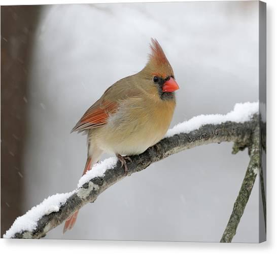 Winter Female Cardinal Canvas Print