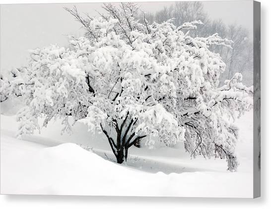 Winter Fluff Canvas Print