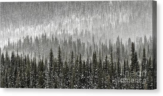 Canvas Print featuring the photograph Winter Forest by Brad Allen Fine Art