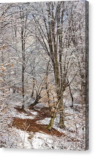Winter Forest Canvas Print by Gabriela Insuratelu