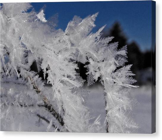 Winter Frost 6 Canvas Print