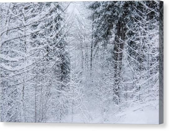 Winter Glow- Canvas Print