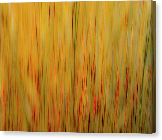 Winter Grasses #1 Canvas Print